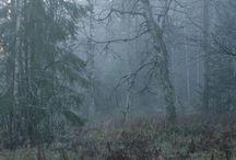 woods / by elizabeth chenoweth