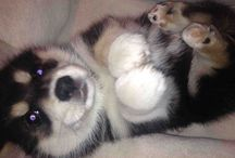 *-Cute Dogs-*