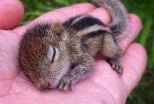 esquilos muito fofos