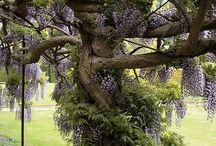Garden Ideas / by Michelle Wenger