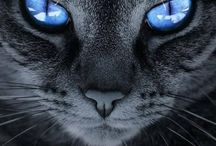 Mesmerizing eyes; animals, people