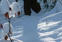 Quattro Staggioni: Inverno