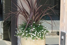 """Planter flower arrangements / This is for the two 17"""" diameter flower pots in front of the house."""