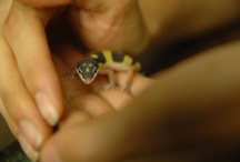 Cute and Interesting Herps