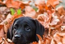 Dogs / Photos / by Kelly Wilkerson