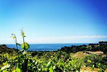 Vineyards with sea views
