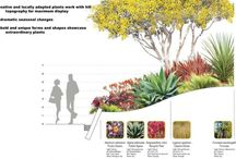 plants diagram