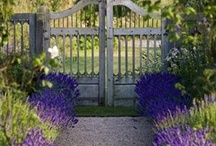 Gates/Fences / Metal / by Shelia Rettinger Martz
