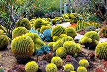 cactusreves