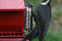 Aves diversas