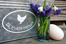 Backyard Poultry Farmer