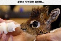 animal babies.