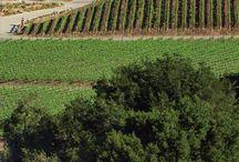Winery <3
