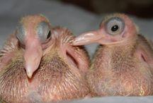 pigeons c: