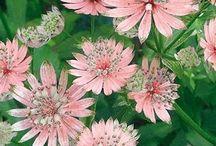 Doğa ve çiçekler