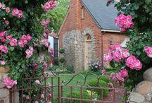 庭  植物  風景