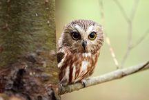 owls, owls, owls,... I LOVE OWLS!