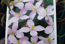 Blomster i hagen / blomster som er plantet i Kloppedalsvegen