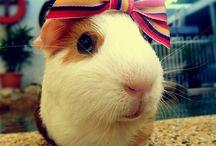 Cutie-Patootie Animals / The cutest animals 'round town!