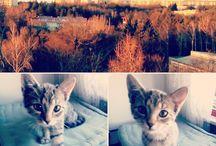 Bedicek and Lilecek / #cats #kittens