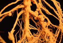 Rhizobiology
