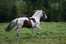 horse training/maintenance