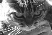 Cat / by loop tecs