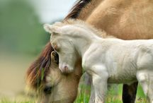 Cute and beautiful horses