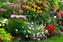 Gardening & Interior Tips / Check out our tips on gardening & Interior
