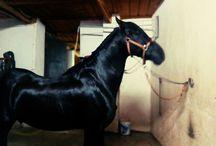 A horse with no name / #Caballos