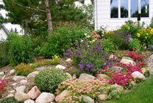 Rock Gardens and Garden Paths / by Pat Cramer Kennedy