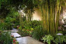 Plantas y patios