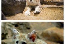 interessante Katzen