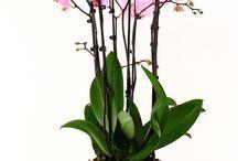 Succulents and Indoor Plants