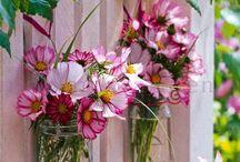 - jardineria -