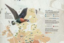 Vogelzug Bird Flyway | LigaVogelschutz