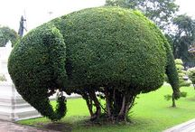 Topiary / Bucket List