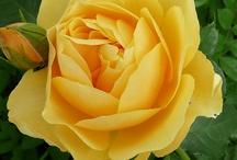 Sunshiny Yellow