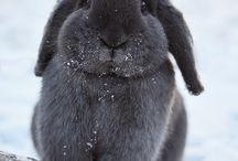 sweet rabbits