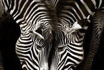 Animals / Oooh