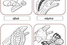 Ο κυκλος της πεταλουδας