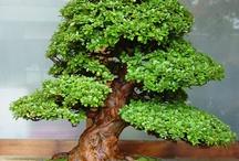 bonsai LIST