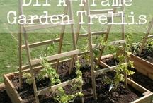 Garden - Trellis