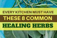 herbs and healing