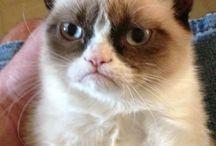 Grumpy cat / by Allison Tsirkas