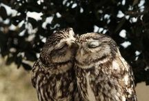 I <3 Owls! / by Kaylyn Ryle
