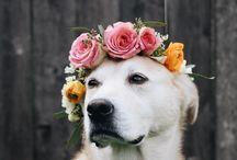 Hond / Geschilderd