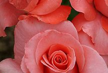 Flower me softly / by Audrey-Ann P. Viens