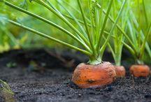 agricultura ..gardina