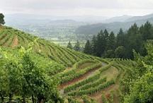 California's wine counties / by Monika Thielen